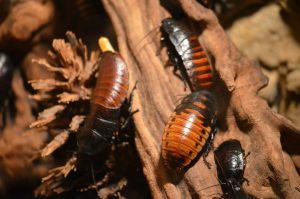 cockroaches on a wood