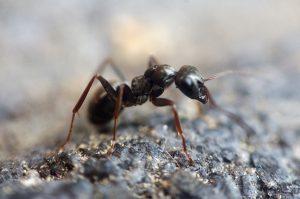 ant on stony ground